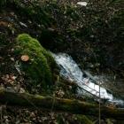 skirgiskes-darom-2012-09